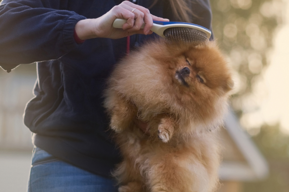 4 Guaranteed Ways to Control Dog Shedding