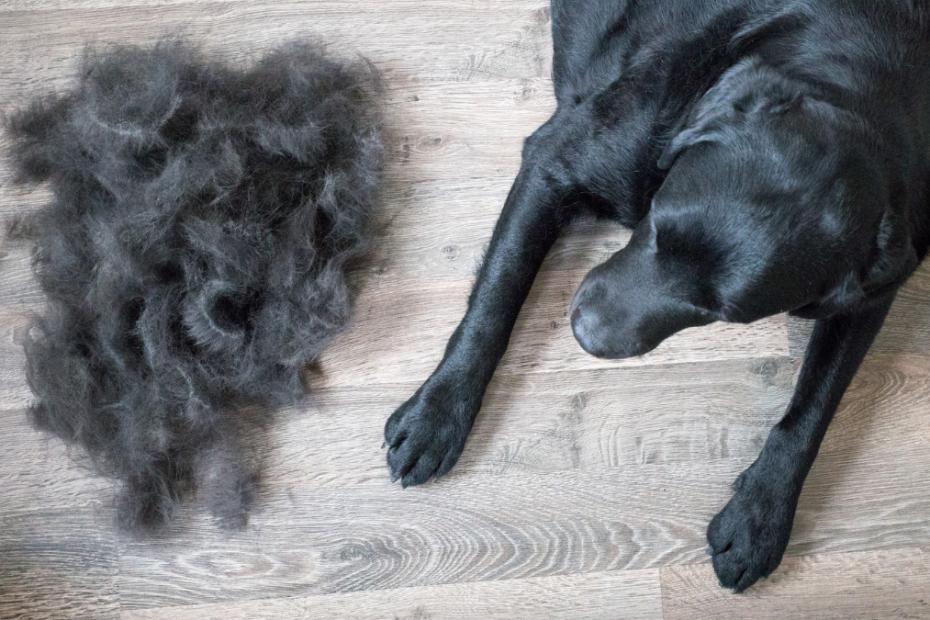 How to Manage Dog Hair Shedding