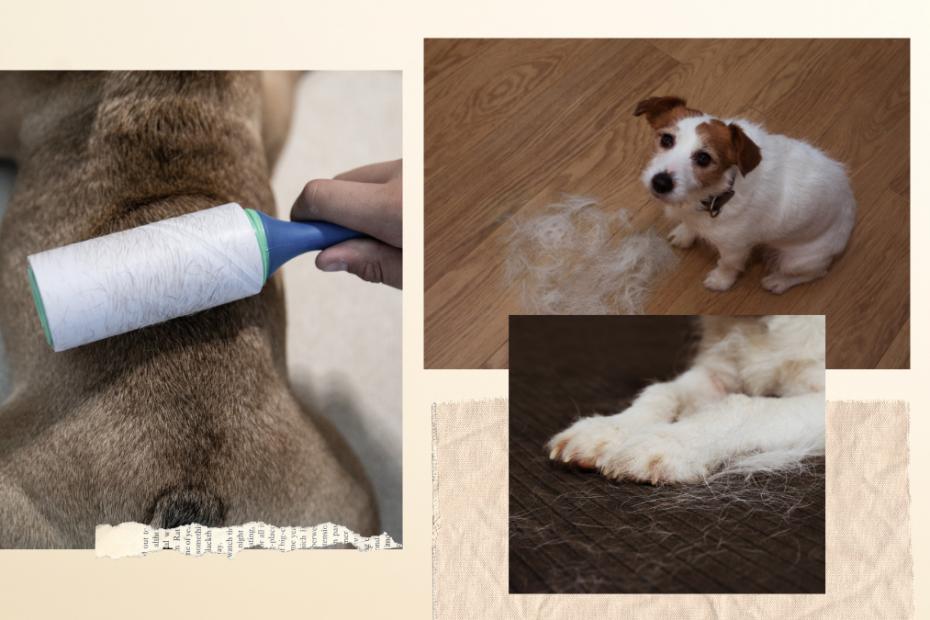 reduce dog shedding