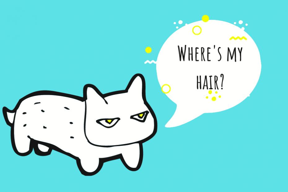 cat losing hair