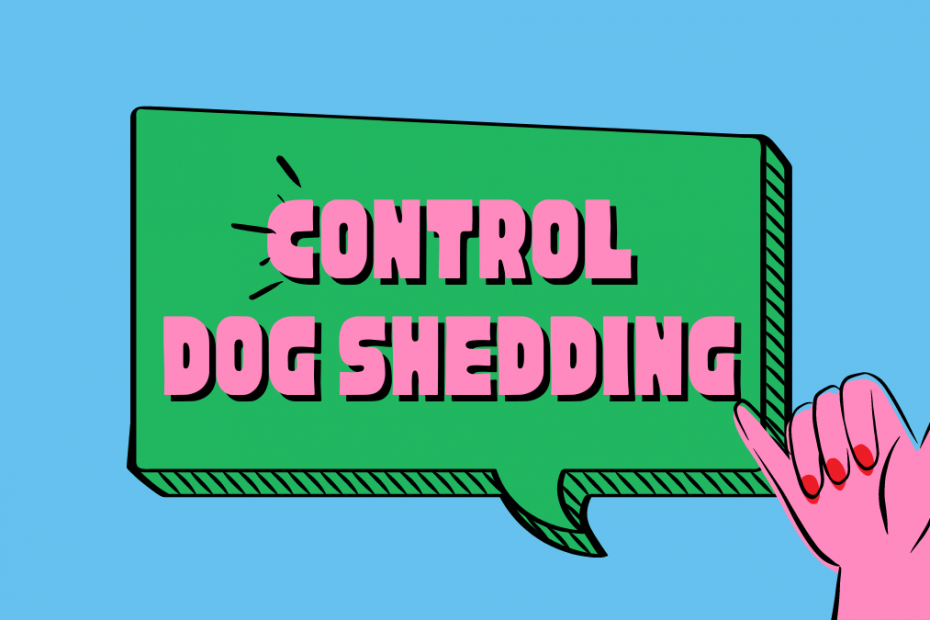 control dog shedding