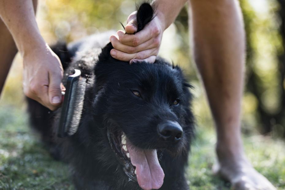 dog hair care