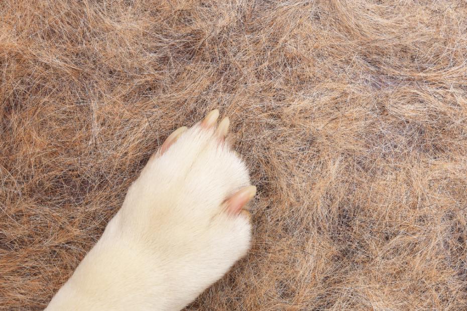 dog hair loss