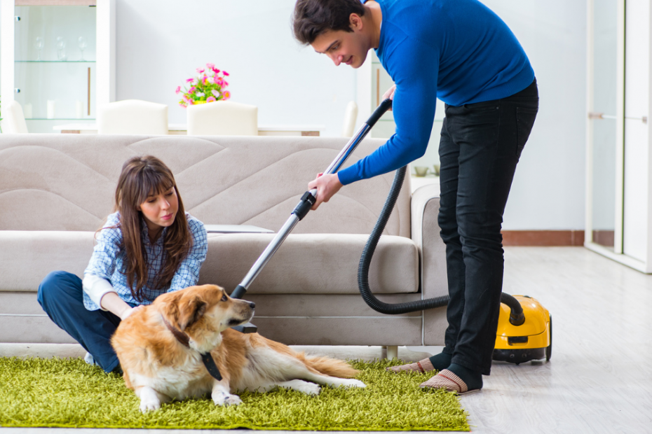is dog hair shedding normal